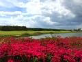 fort-myers-amenities-miromar-golf-course-view.jpg